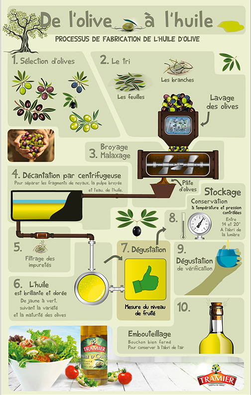 Infographie processus fabrication huile d'olive